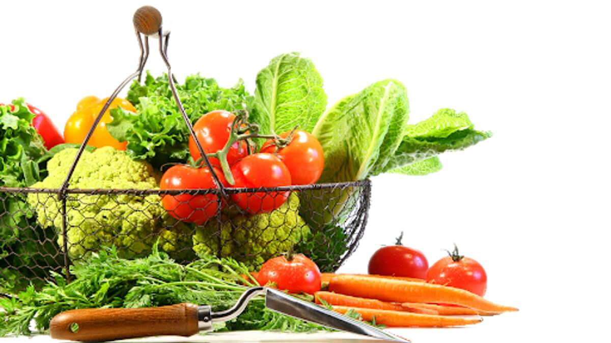 Raw Food for Cats   Raw Food for Dogs   Raw Cat Food   Raw Dog Food   Raw Food for Pets   BARF   PREY   Biologically Appropriate Food for Cats and Dogs